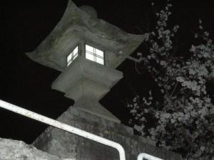 常夜灯と桜の写真