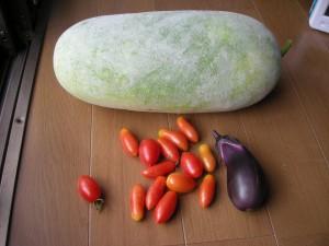 31日にとれた野菜