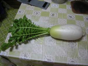 葉つきの太いダイコンが1本写った写真