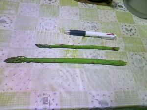 4月21日収穫したアスパラガス