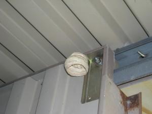 物置の戸の上部に蜂の巣が付いている