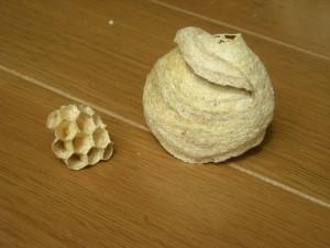 2つの部分に分かれた蜂の巣