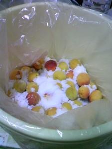 プラスチック樽の中に梅と塩を入れてある