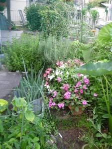 里芋、ローズマリー、インパチエンスなどの植物が茂る前庭の様子