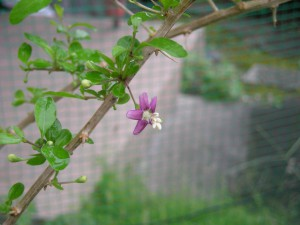 画面中央に紫色のくこの花が1輪咲いている。
