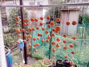 五個ずつひもにぶら下げられた干し柿が並んでいる