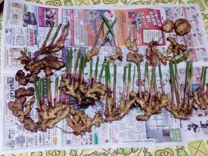 新聞紙の上に広げられた収穫した生姜の塊