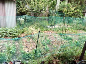 菜園の様子2016/05/28
