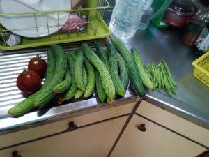 たくさんの収穫物 2016/07/13