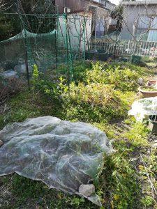 菜園2021年2月